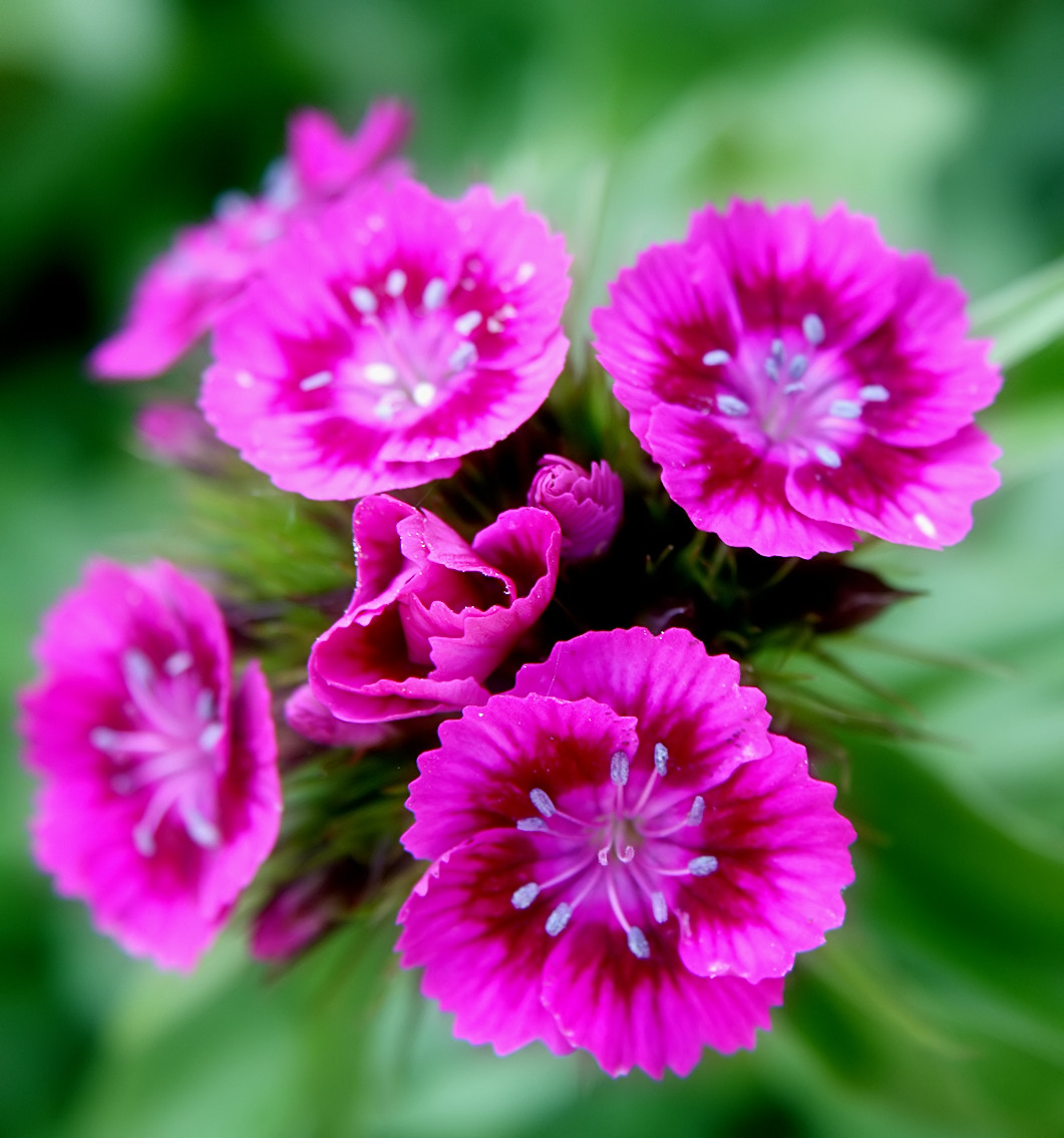 Flowers jpg images graphic royalty free library 79 best ideas about Flowers on Pinterest | Pink daisy, Cherry ... graphic royalty free library