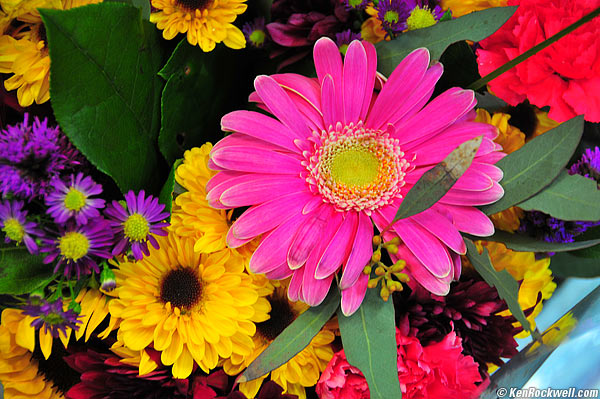 Flowers jpg images picture freeuse download 1000+ images about Flowers of the world on Pinterest | Sunflower ... picture freeuse download