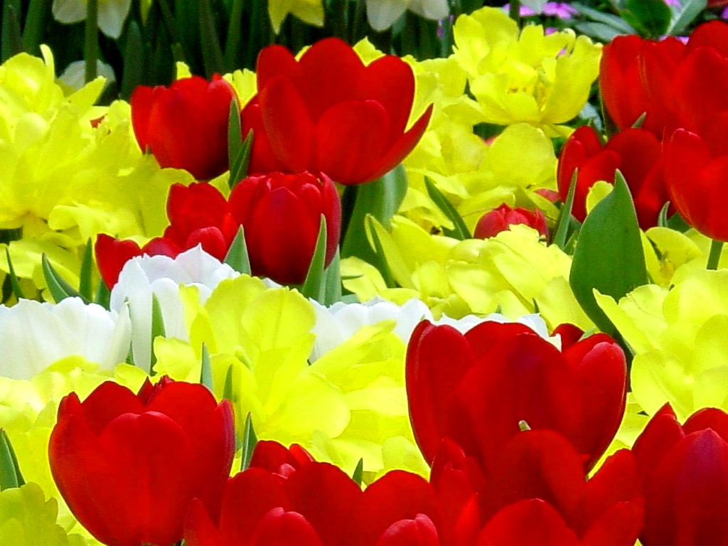 Flowers jpg images png royalty free stock Most Beautiful Flowers | Pictures of, Flower and Flower pictures png royalty free stock