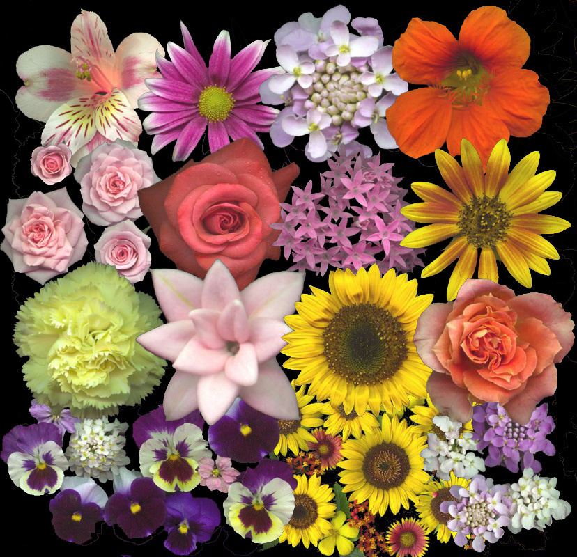 Flowers jpg images clip black and white library flowers.jpg clip black and white library