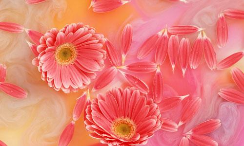 Flowers photos download graphic transparent stock Download Flower Wallpapers, Flower Pics, Flower Picture, Flower ... graphic transparent stock