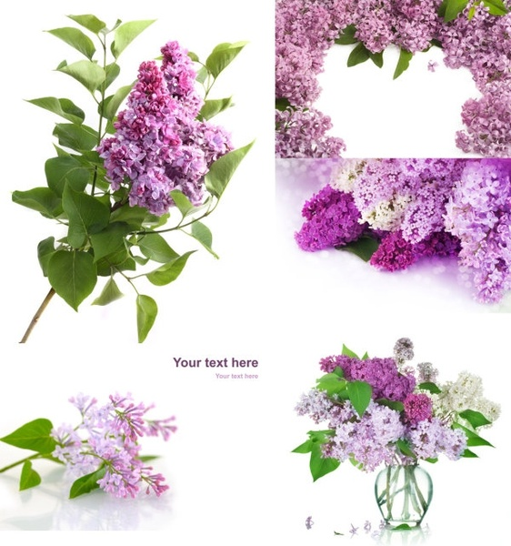 Flowers photos download clipart black and white library Flower images free stock photos download (10,902 Free stock photos ... clipart black and white library