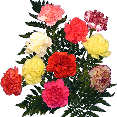 Flowers photos free png royalty free Flowers free - ClipartFest png royalty free