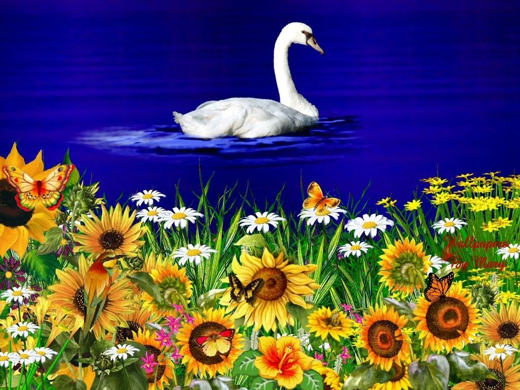 Flowers photos free download jpg royalty free Free Wallpapers Spring Flowers - Wallpaper Cave jpg royalty free
