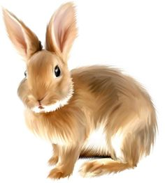 Fluffy bunny clipart clip art transparent 45 Best rabbit clipart images in 2019 | Easter bunny, Rabbits, Spring clip art transparent