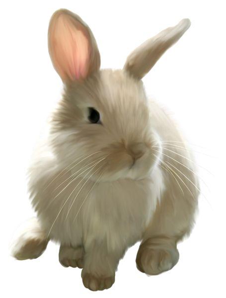 Fluffy bunny clipart. Free sleepy rabbit cliparts