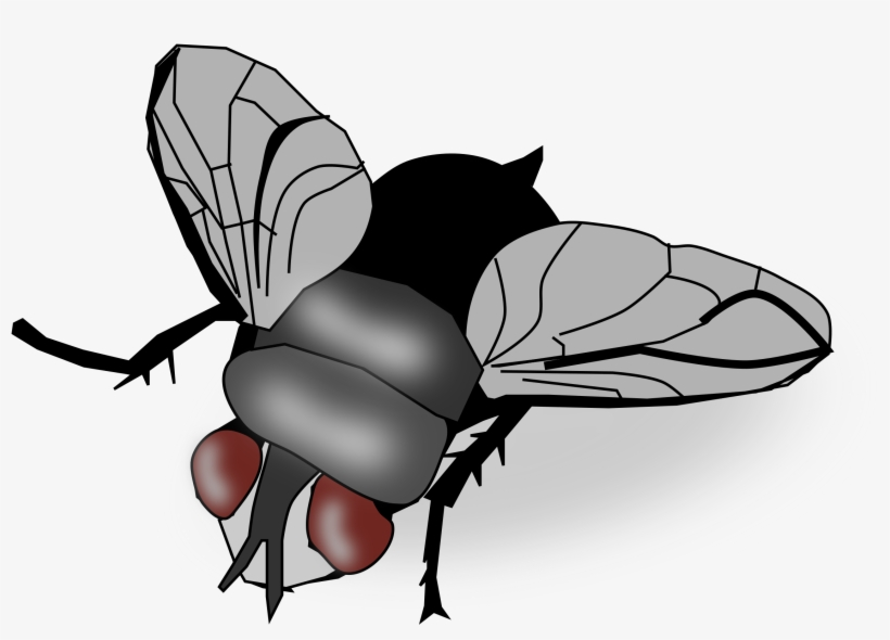 Fly pictures clipart clip art black and white download Fly Png Image - Fly Clipart Transparent PNG - 2400x1605 - Free ... clip art black and white download