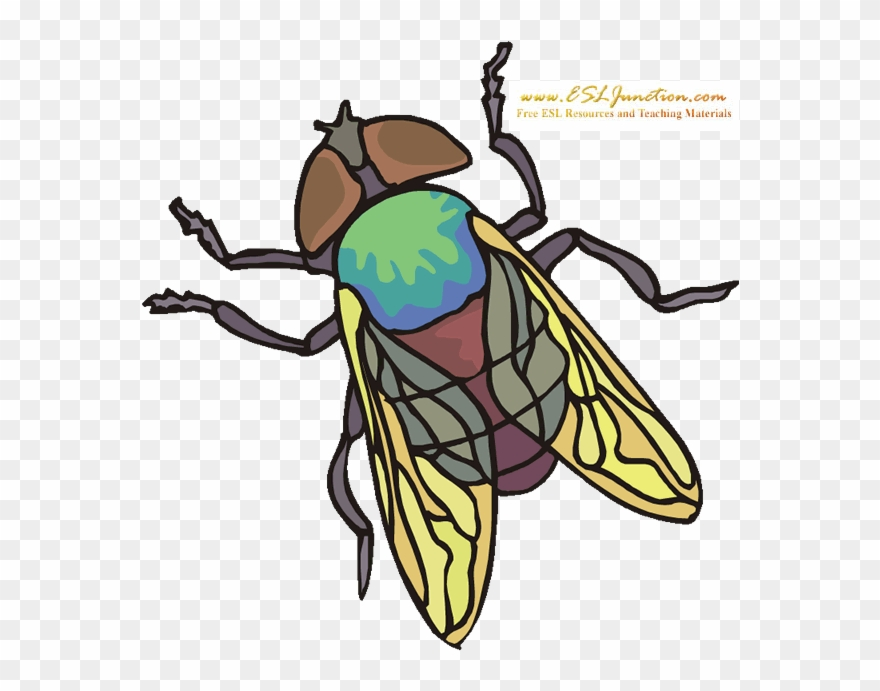 Flying bug clipart jpg transparent download Bugs And Insects Esl Junction Fly - Net-winged Insects Clipart ... jpg transparent download