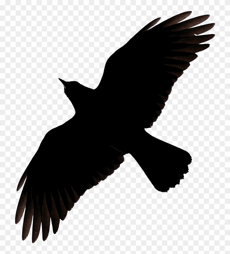 Flying crow clipart svg Flying Crow Raven Clip Art - Raven Flying Silhouette - Png Download ... svg