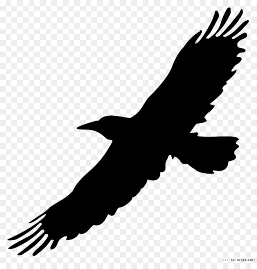 Flying crow clipart clip freeuse stock Free Flying Crow Silhouette, Download Free Clip Art, Free Clip Art ... clip freeuse stock