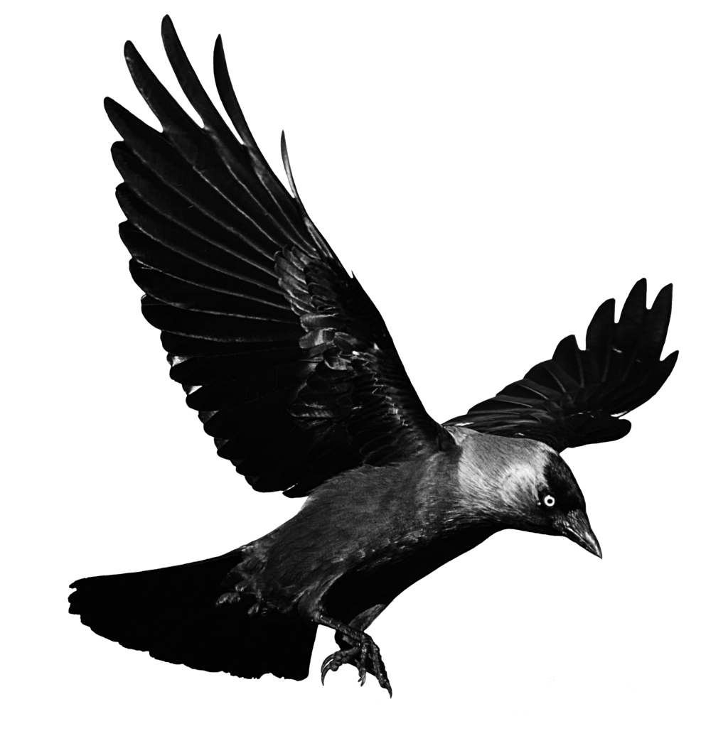 Flying crow clipart jpg library stock Crows Flight Clip art - Raven Flying Transparent Background png ... jpg library stock