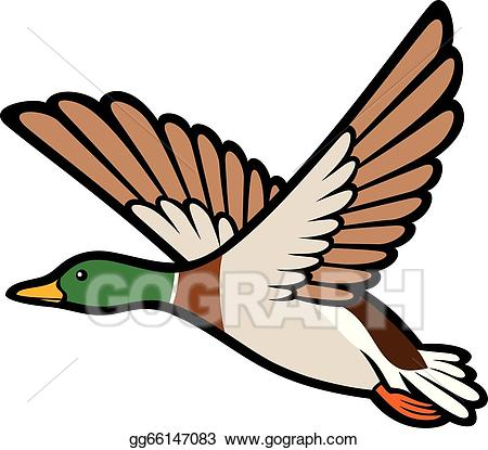 Flying duck clipart picture stock Vector Art - Mallard duck flying . Clipart Drawing gg66147083 - GoGraph picture stock