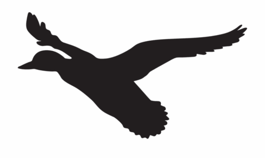 Flying duck clipart picture download Flying Duck Silhouette Png , Png Download - Flying Duck Clip Art ... picture download