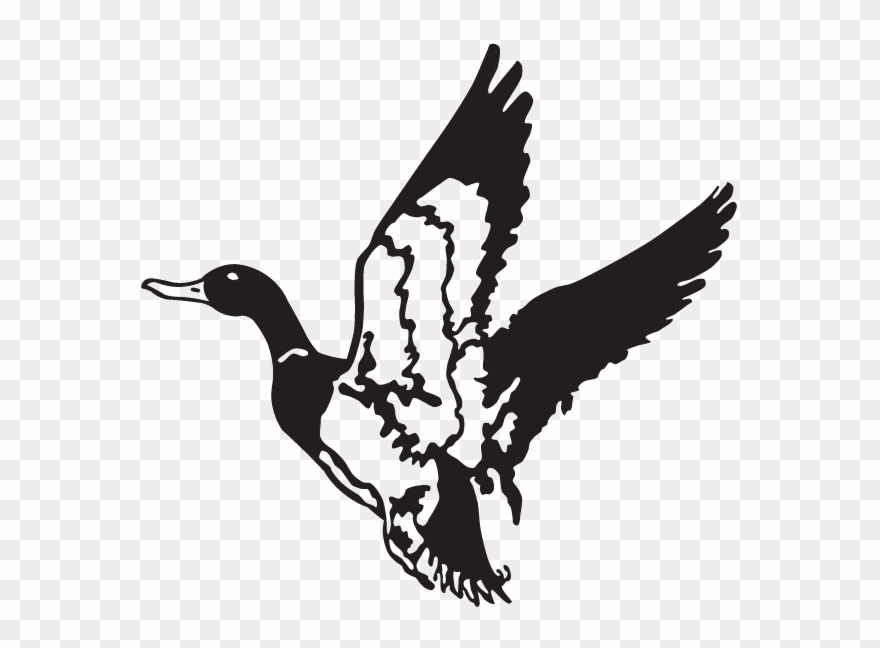 Flying ducks clipart black and white jpg Duck Hunt Duck Png - Clip Art Duck Flying Transparent Png (#3798346 ... jpg