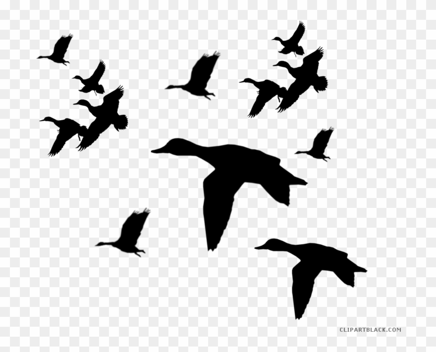 Flying ducks clipart black and white image stock Picture Freeuse Duck Clipartblack Com Animal Free Black - Flying ... image stock