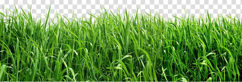 Fodder clipart svg free Grass Field transparent background PNG clipart | HiClipart svg free