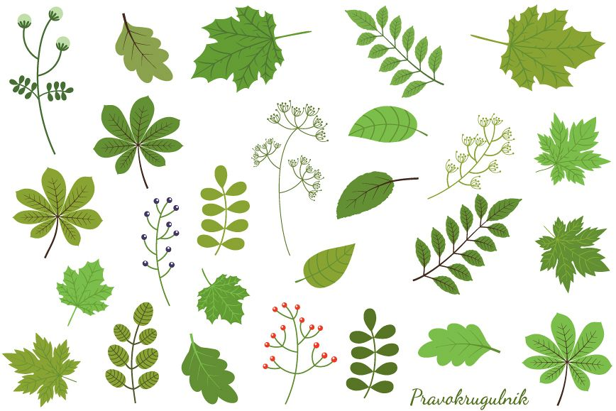 Green leaves set spring. Foliage clipart