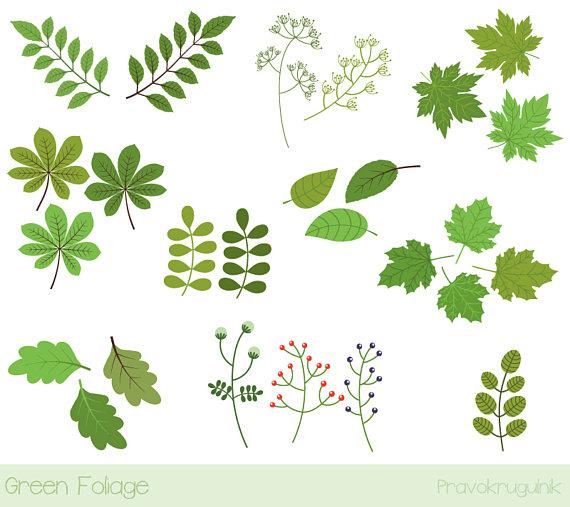 Foliage clipart. Green leaf spring oak