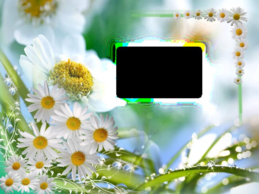 Fondos para fotos clipart gratis clip art black and white stock Blossom Background clipart - Flower, Daisy, Sky, transparent clip art clip art black and white stock