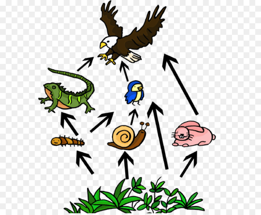 Food chain cliparts clip art free stock Owl Cartoon png download - 650*734 - Free Transparent Food Web png ... clip art free stock