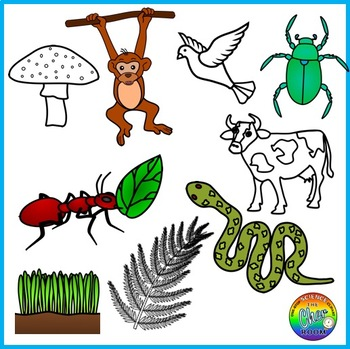 Food chain cliparts transparent Ecosystem Clipart (Energy Pyramid, Food Chain, Food Web) transparent