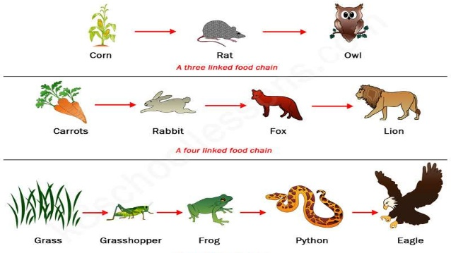 Food chain cliparts picture black and white Food chains clipart 7 » Clipart Station picture black and white
