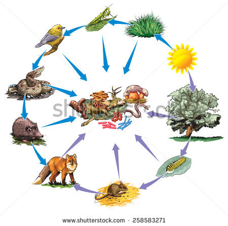 Food for animals clipart vector black and white library Animal Food Chain Stock Images, Royalty-Free Images & Vectors ... vector black and white library