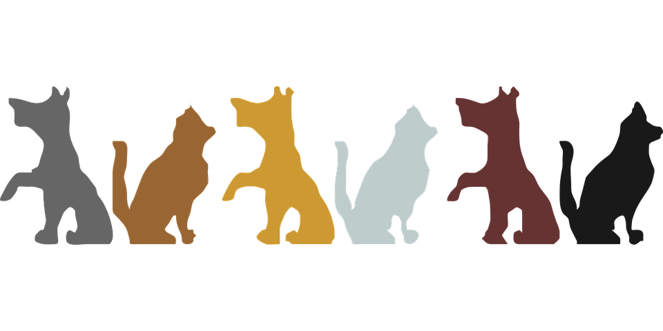 Thanksgiving dog clipart png royalty free Dog Clipart Transparent Background | Free download best Dog Clipart ... png royalty free