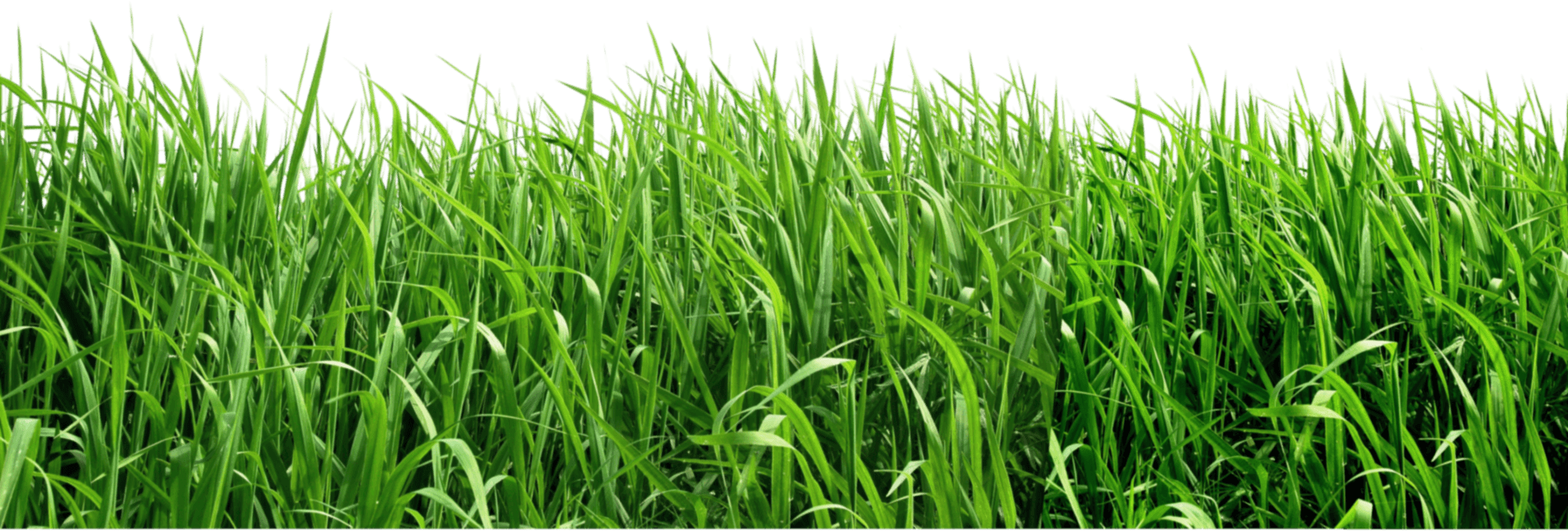 Football feild clipart picture black and white stock Grass Field Cliparts - Cliparts Zone picture black and white stock