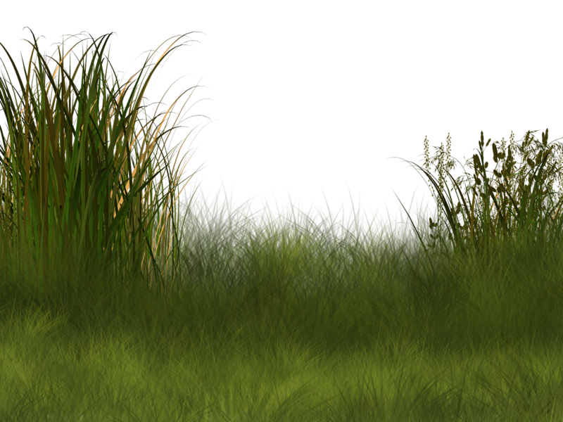 Football field background clipart clip art royalty free library Plant Wetland Landscape Clip art - Field background pattern 800*600 ... clip art royalty free library
