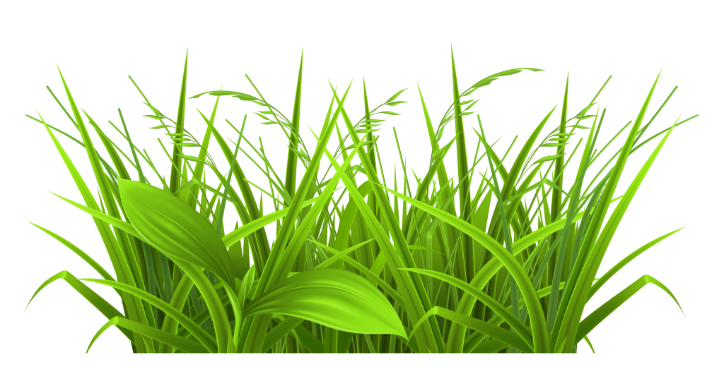 Football grass clipart image free Grass With Beautiful Poppies PNG Clipart - peoplepng.com image free