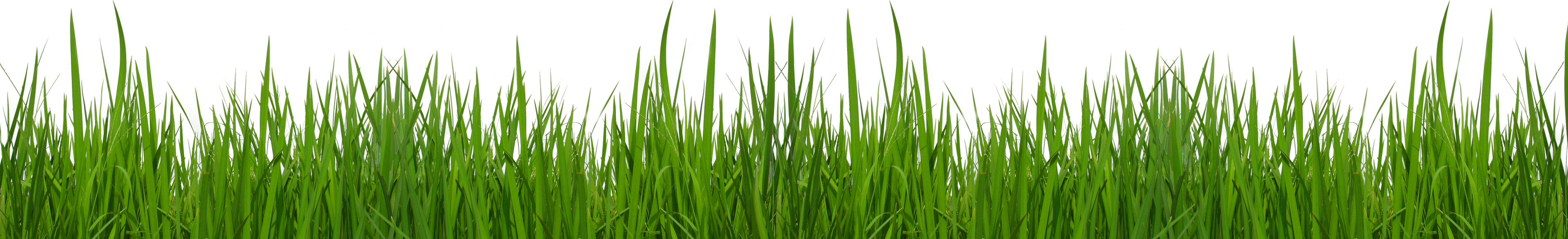 Football grass clipart clipart black and white stock Grass Ground With Flowers Clipart Picture - peoplepng.com clipart black and white stock