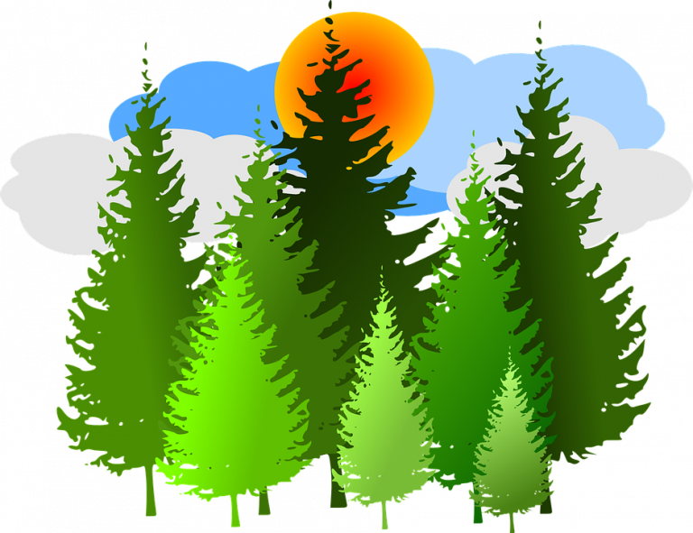 Forest clipart free. Hd spruce conifer vector