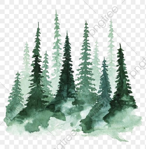 Hand painted watercolor deep. Forest clipart transparent