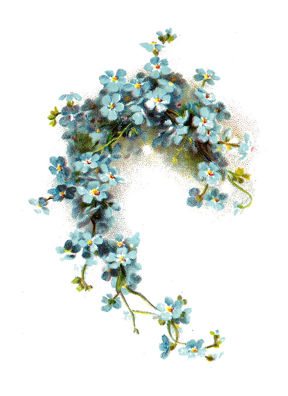 Ivy flower clipart jpg transparent library Image - Flower-clip-art-blue-forget-me-not-flower-graphic-from ... jpg transparent library