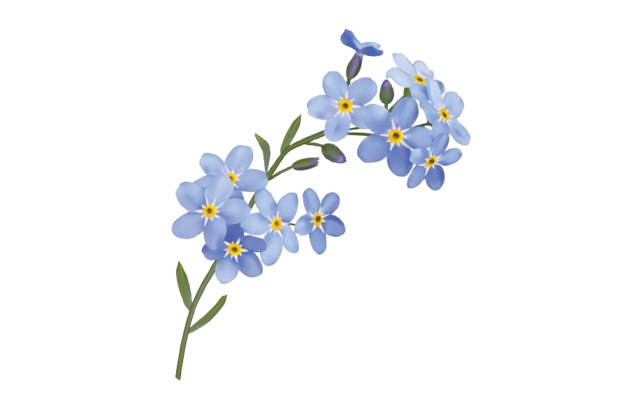 Clipart forget me not picture royalty free forgetmenot #flowers #freetoedit - Forget Me Not Png Free PNG Images ... picture royalty free