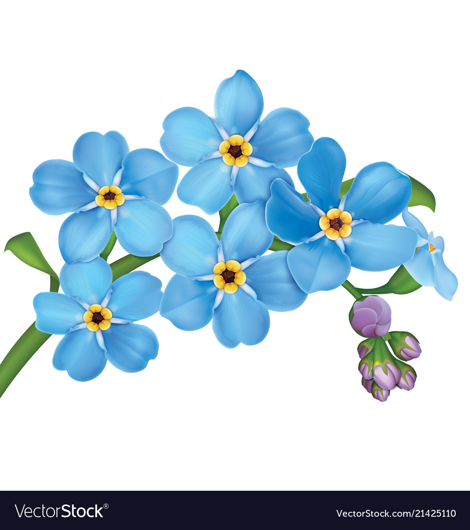 Forget me not flowers clipart clipart royalty free stock Bunch of blue forget me not flowers with leaves clipart royalty free stock