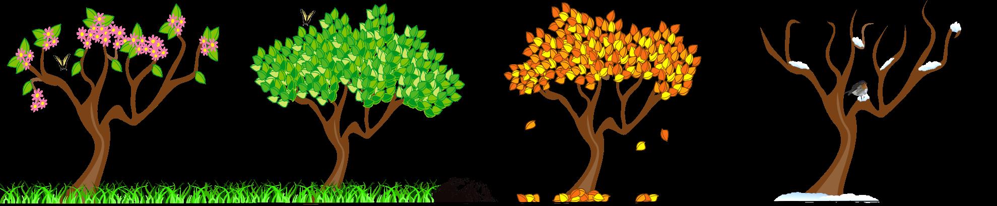 Four seasons tree clipart free