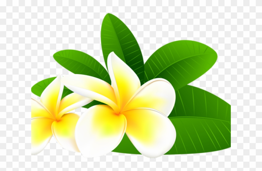 Frangipani clipart banner royalty free Plumeria Clipart Tropical Flower - Frangipani Flowers Clipart, HD ... banner royalty free