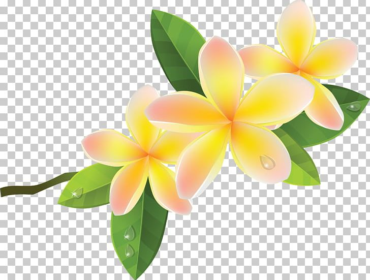 Frangipani clipart jpg black and white Frangipani PNG, Clipart, Clip Art, Computer Icons, Download ... jpg black and white