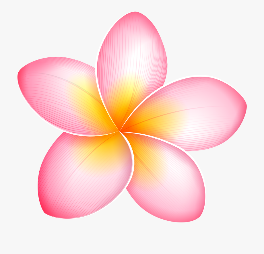 Frangipani clipart png free Blue Tropical Flower Png - Pink Plumeria Flower Clipart #231061 ... png free