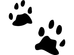 Free animal tracks clipart vector download Free Animal Tracks Cliparts, Download Free Clip Art, Free Clip Art ... vector download