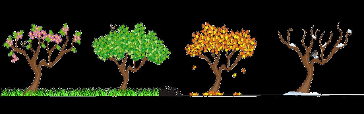 Four seasons tree clipart free graphic library Image - C5bb7e8edcf0bae6667fc9f5604406db free-seasons-clip-art-tree ... graphic library
