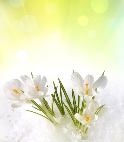 Free background pictures of flowers graphic black and white Spring flowers background free stock photos download (20,488 Free ... graphic black and white