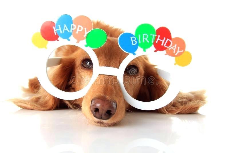 Free birthday clipart pets jpg graphic freeuse library dog birthday clipart – artsoznanie.com graphic freeuse library