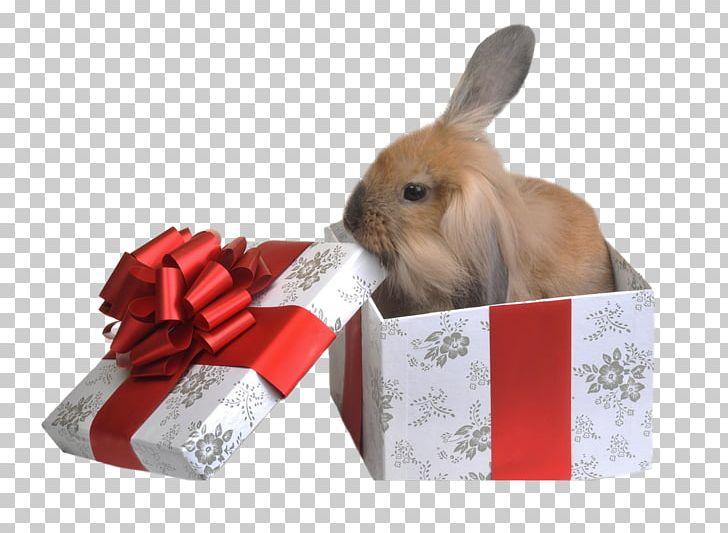 Free birthday clipart pets jpg jpg Rabbit Gift Pet Birthday Photography PNG, Clipart, Animals, Birthday ... jpg