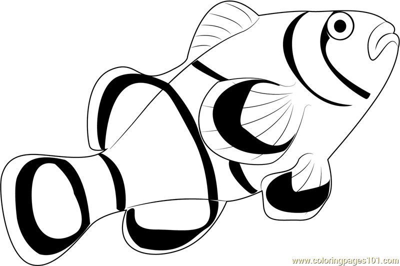 Free black and white clipart for clown fish picture transparent library Clown Fish Clipart Black And White | Free download best Clown Fish ... picture transparent library