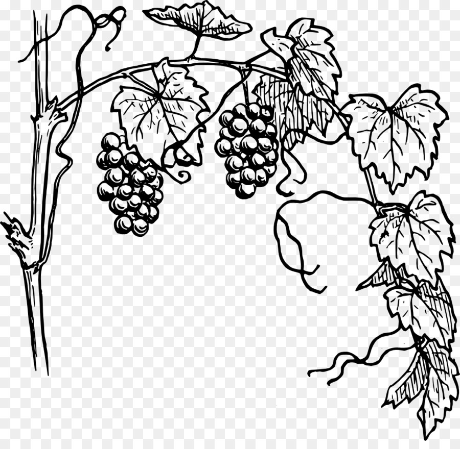 Flower download transparent . Free black and white clipart grape vione png