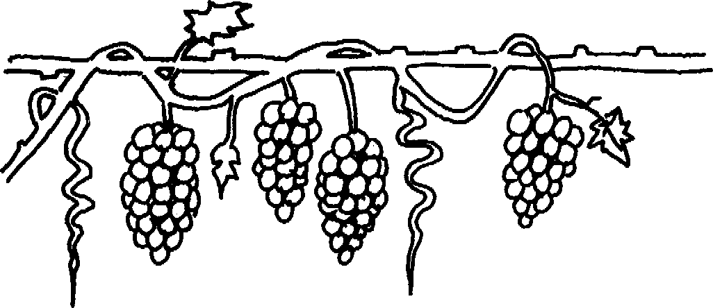 Of vine cliparts for. Free black and white clipart grape vione png