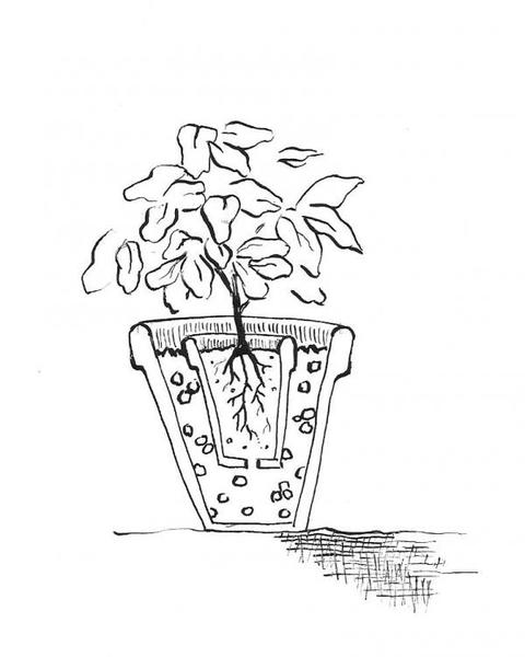 Free black and white clipart of trees planted in buckets svg transparent download 18. Plants Grown in Containers | NC State Extension Publications svg transparent download